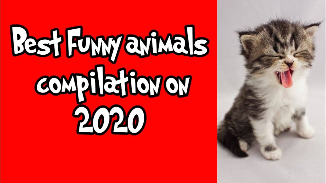 Funny animal compilation on 2020 - Pets Squad #2