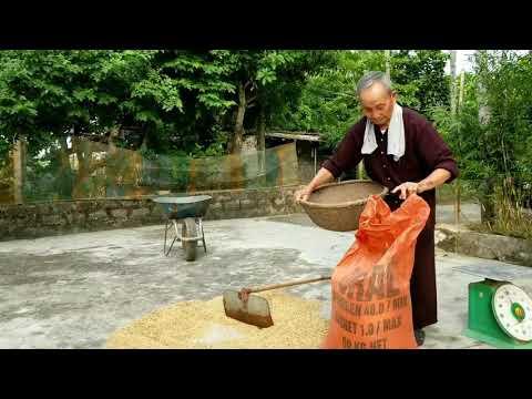 Cụ ông Hơn 100 Tuổi Vẫn Còn đi Gặt Lúa, Bổ Củi (Over 100 Years Old Still Can Do Anything)