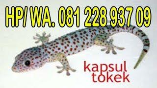 LAMPUNG, KOMPAS.TV - Pihak Dinas Kesehatan kota Bandar Lampung, membantah bahwa Puskesmas rawat inap.