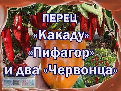 Обзор лучших сортов сладкого перца. Урожай 2019 г. Мой опыт. | характеристика | болгарский | сладкий | гибриды | семена | отзывы | лучшие | сорта | перца | перец