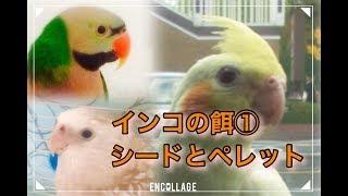 【ブログ】 https://ameblo.jp/heruman-ch/entry-12353808572.html 【関...