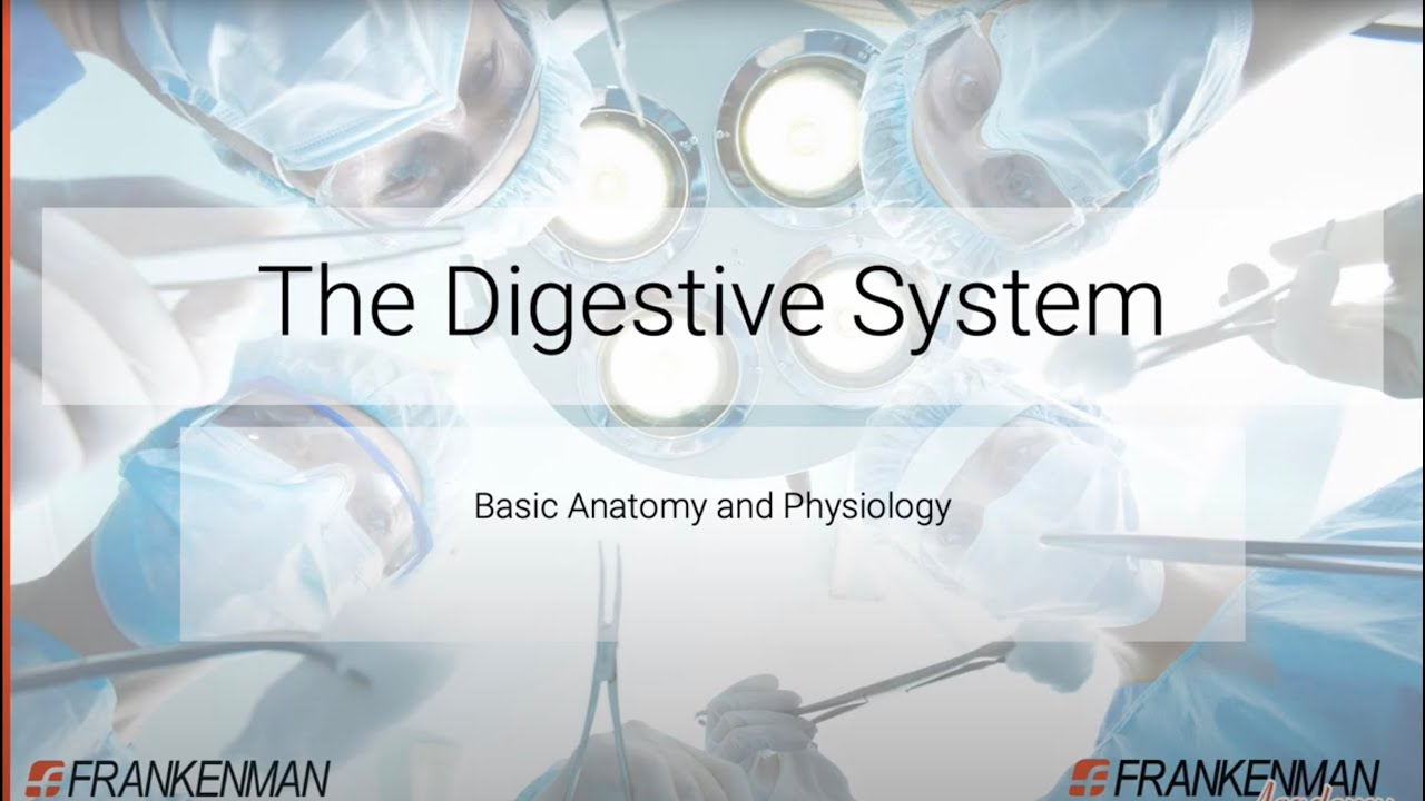 The Digestive System - Basic Anatomy and Physiology By ...