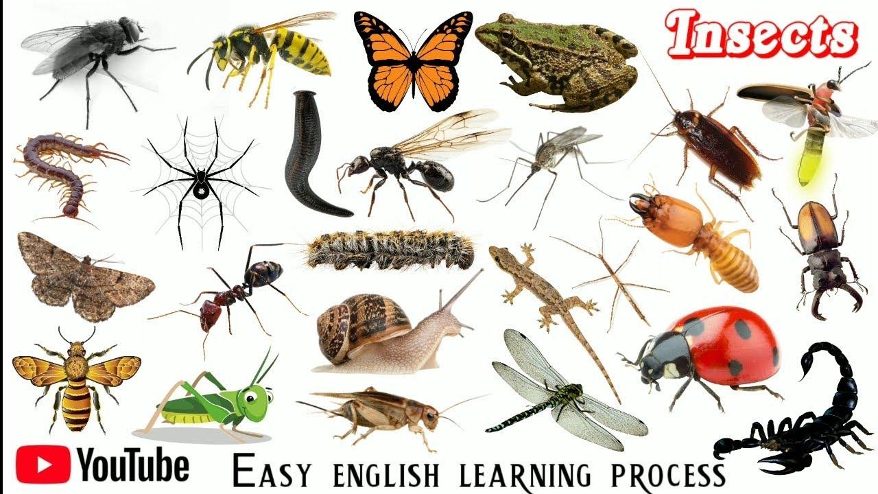 Insects Name English Language À¤• À¤¡ À¤®à¤• À¤¡ À¤• À¤¨ À¤® Insect Name Easy English Learning Process Youtube