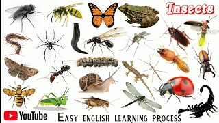 Insects name english language || कीड़े मकोड़े के नाम || Insect Name || Easy English Learning process