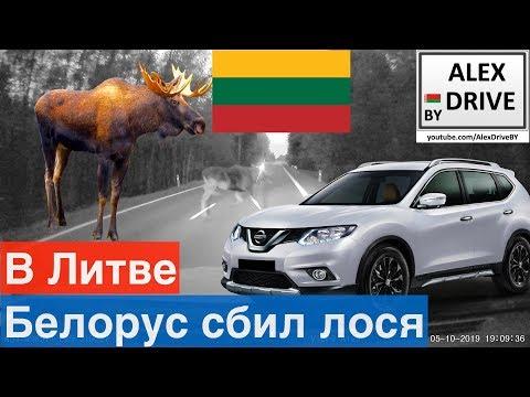 Белорус сбил лося