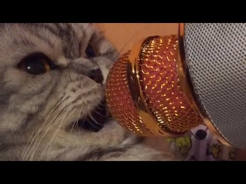 Talking Cats | Funny Pet Compilation 2018