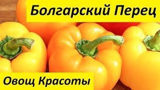Болгарский Перец - Овощ Красоты
