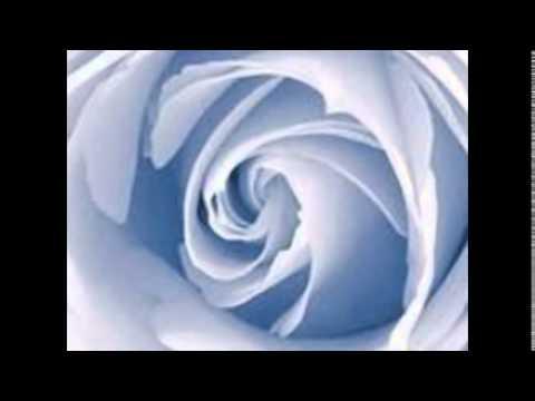 картинки роз.