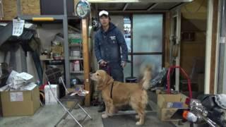 ハロの動画を撮っています。皆さんの犬のケアに役に立つ事を発信してい...