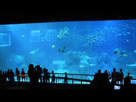 Giant Aquarium at Marine Life Park, Sentosa Singapore