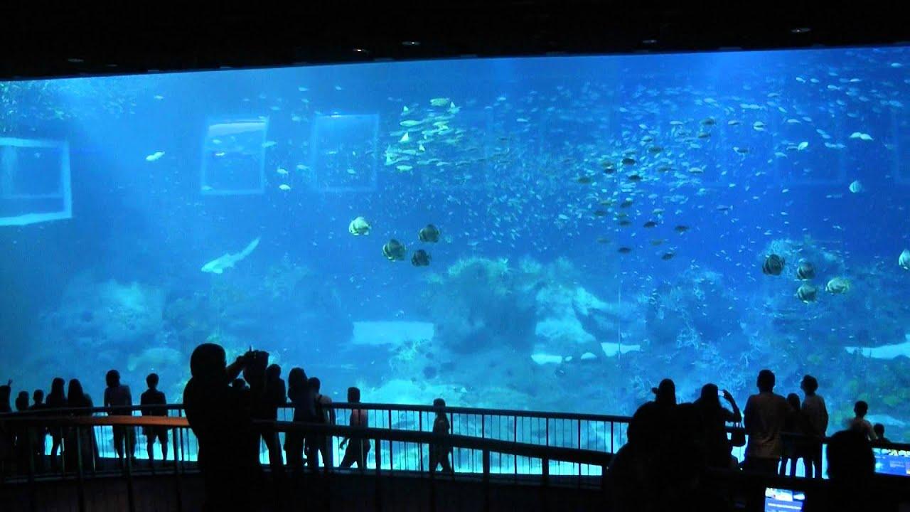 Giant Aquarium at Marine Life Park, Sentosa Singapore - YouTube