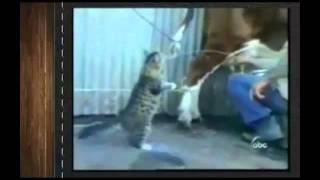 Супер Прикольные Смешные Животные!(2) Лови улыбку)  Угарный ржач! Подборка приколов с животными