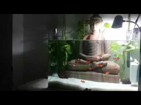 Buddha Theme Tetra Fish Aquarium