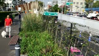 Mexico City ecoduct key in cleaning city air