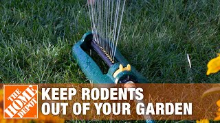 How Keep Unwanted Rodents Out Your Garden