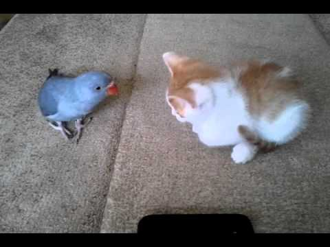 Very cute kitten vs bird fight