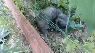 Кошка роды родила котят часть 1