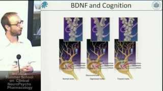 BDNF and neuropsychiatric disorders, an hippocampal history - Gabriele Baj, Università di Trieste