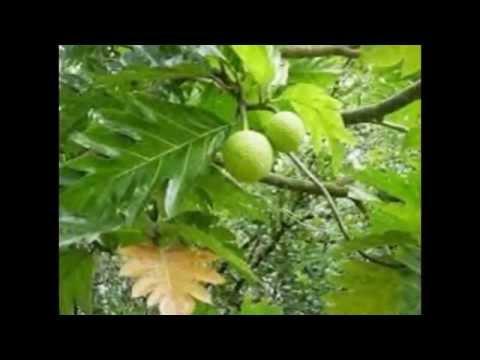 Tổng hợp các loại cây trái có thể chữa bệnh sỏi thận hiệụ quả