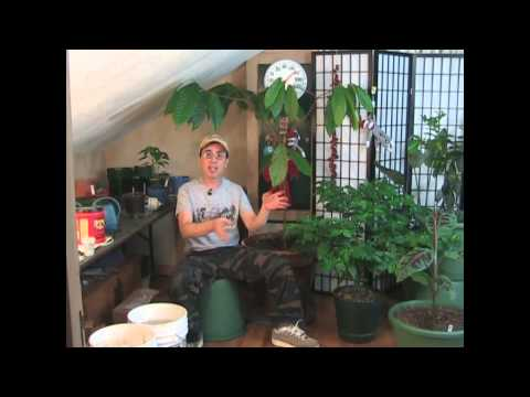 Best Indoor Growing Tips!