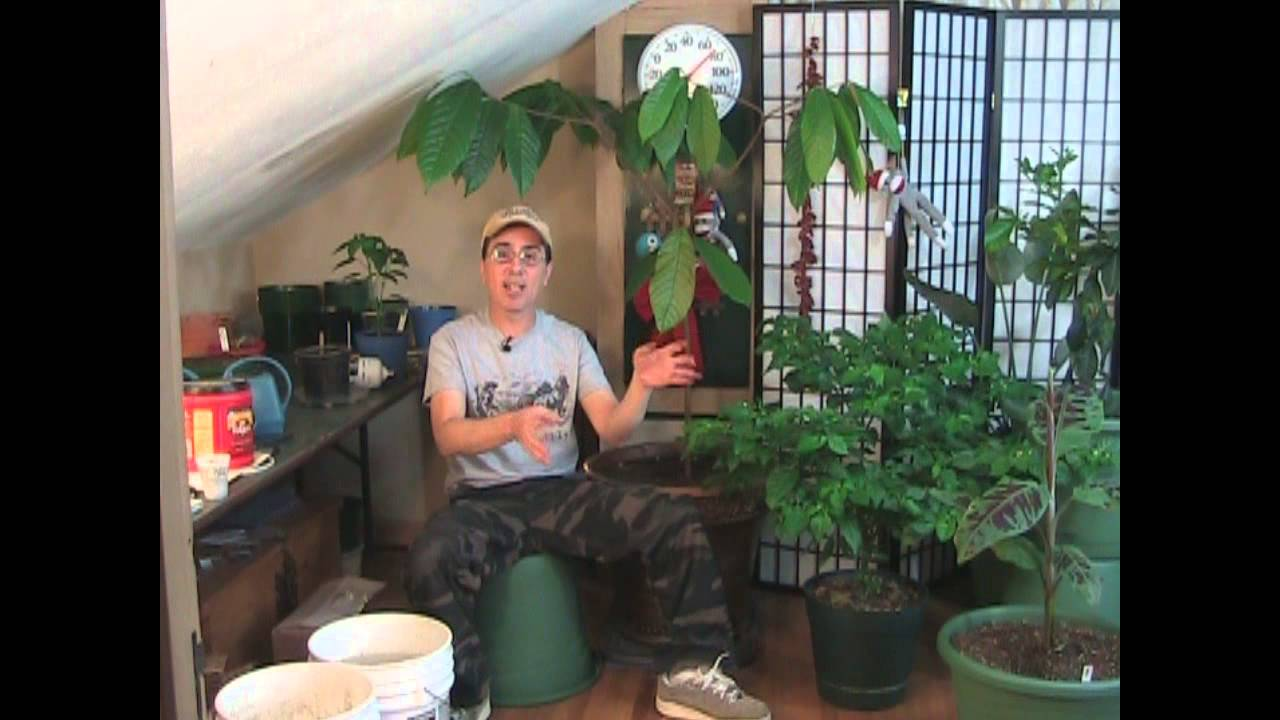 Best Indoor Growing Tips!   YouTube