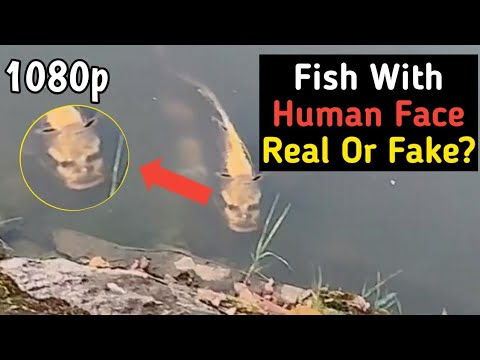 Fish With HUMAN FACE! Real Or Fake?