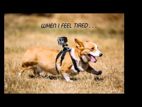 cutest corgi dog story ever