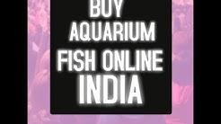 BUY AQUARIUM FISH ONLINE INDIA |ऑनलाइन मछली कैसे ख़रीदे|