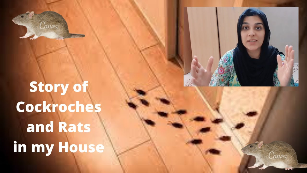 STORY TIME - My House was full of Cockroaches and Rats - yuck!! Scary Cat sized Rats