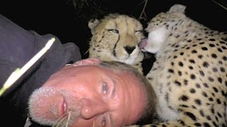Camping Inside A Cheetah Enclosure | Big Cats Snuggle Cuddle Purr Groom And Sleep With Friend