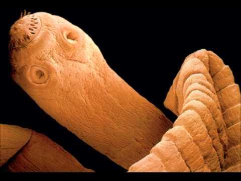 Lanalyse de lexcrément sur les protozoaires et les oeufs des entozoaires la préparation