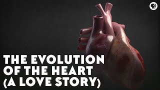 The Evolution of the Heart (A Love Story)