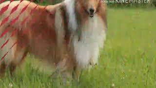 Какая ты собака по знаку зодиака. thumbnail