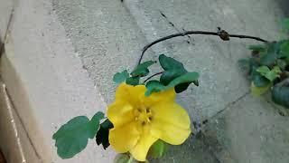 Nibiru flowers!!(2)