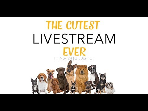 🐩 Our Cutest Live Stream Ever - Black Friday Sale 🐶 | Live Stream  | The Edgy Veg