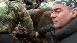 natură și aventură situația zimbrilor din parcul natural