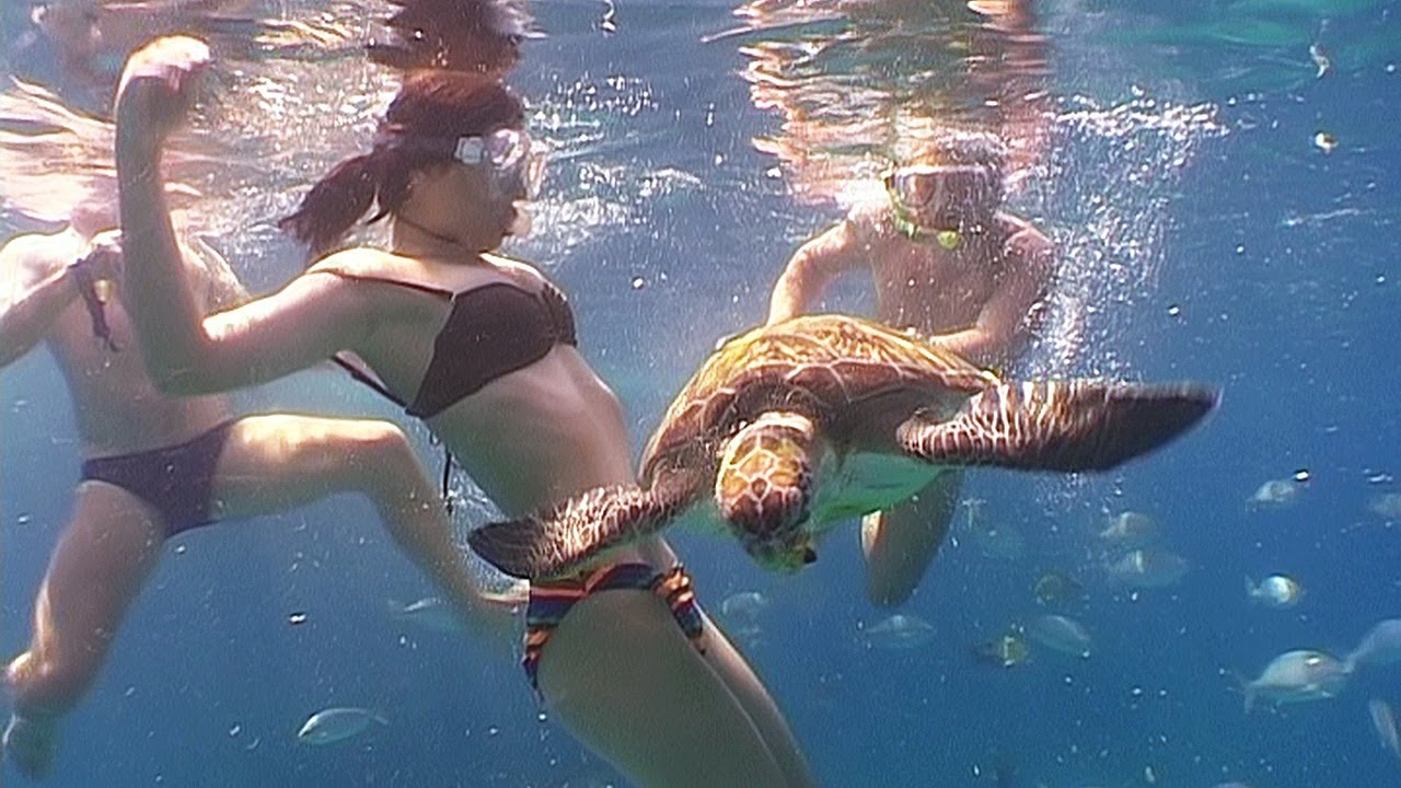 Giant underwater snake - photo#27