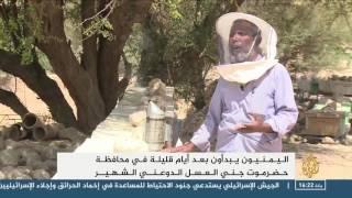 عسل السدر هو الأجود والأغلى في اليمن