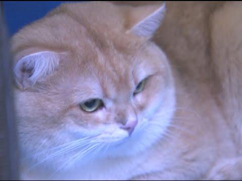 International Cat Show Kicks off in Southwest China