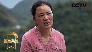 《遍地英雄》 20200528 五百多山里娃的妈妈|CCTV农业