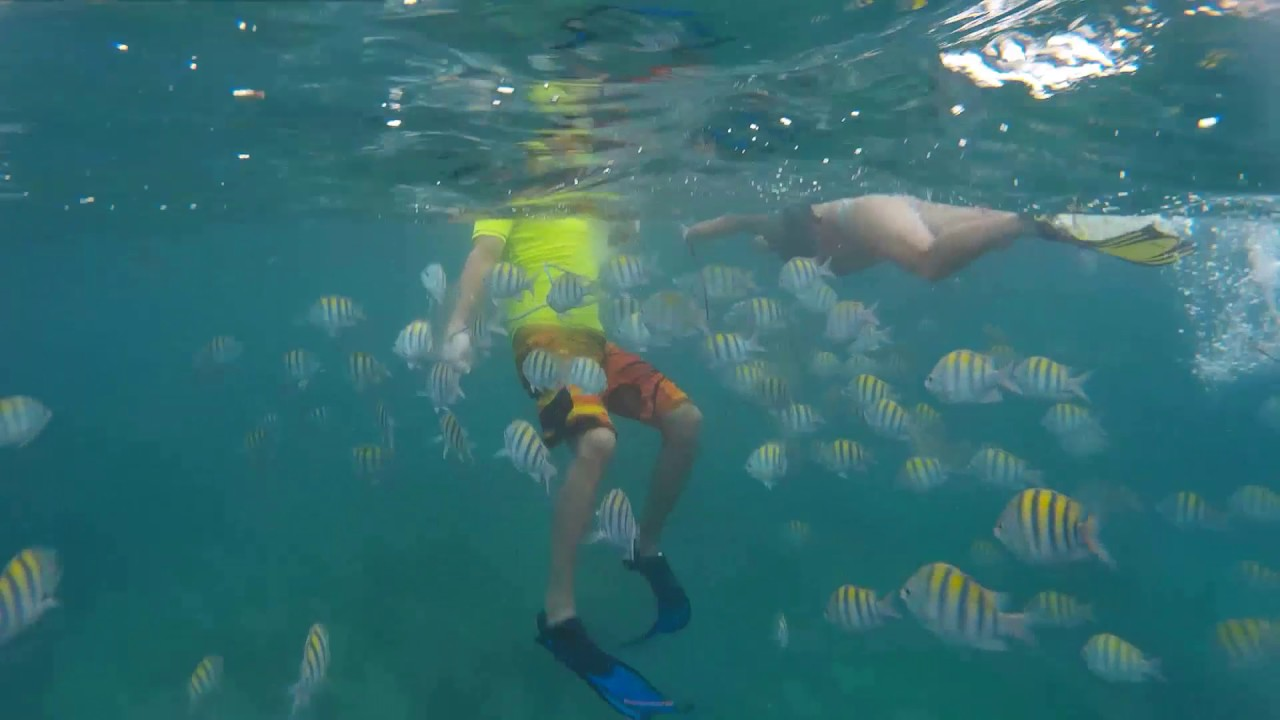 Snorkeling At Bavaro Beach In Punta Cana