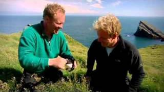 gordon ramsay gets bitten on the nose by a puffin gordon ramsay