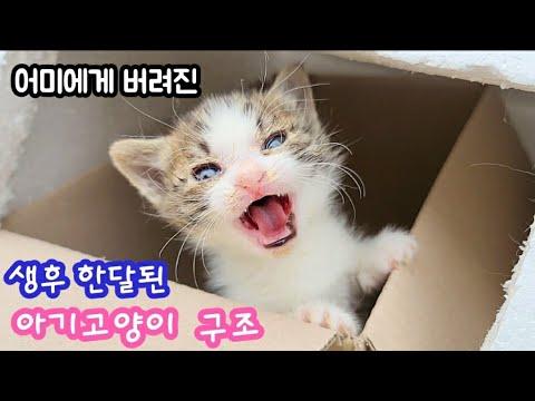 어미고양이 에게 버려진 생후 한달된 아기고양이 구조, rescue kitten,  이쁜이와 햅펀 길고양이 이야기