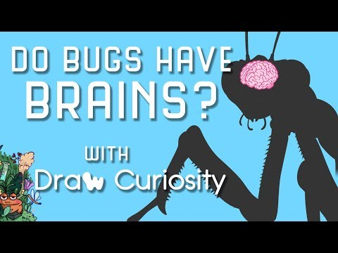 Do Bugs Have Brains?