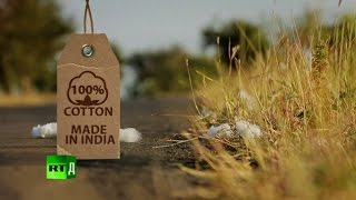 100% Cotton. Made in India: Farmers commit suicides after planting GMO cotton