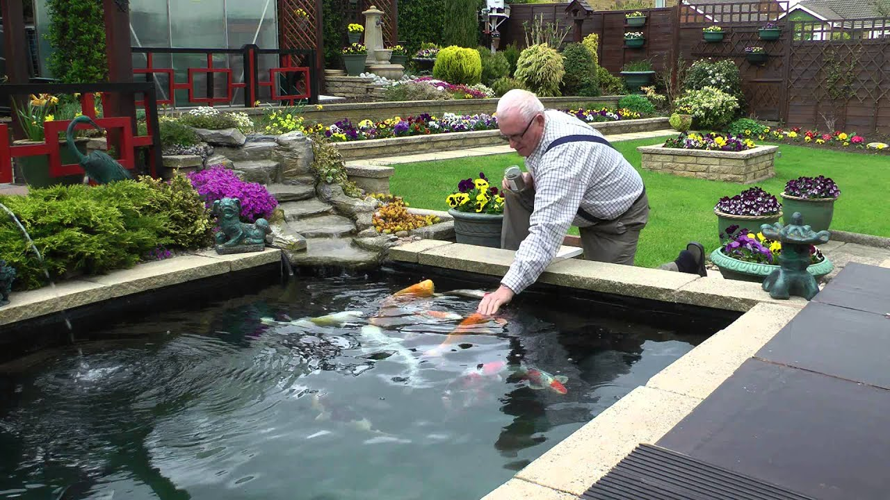 Koi carp pond latest 2013 youtube for Carp pond design