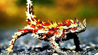 видео: 10 Животных Поражающих Воображение