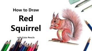 How to Draw a Red Squirrel with Color Pencils [Time Lapse]