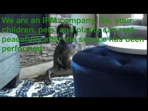 Springer Professional Home Services- Integrated Pest Managemnt