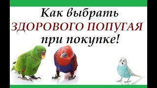 Покупка попугая! Как выбрать здорового попугая и не купить больного.